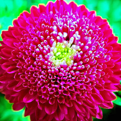 Painting - Chrysanthemum Painting by Bob and Nadine Johnston