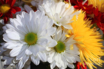 Photograph - Chrysanthemum Punch by Cathy  Beharriell