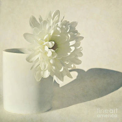 Chrysanthemum Shadow Art Print by Lyn Randle