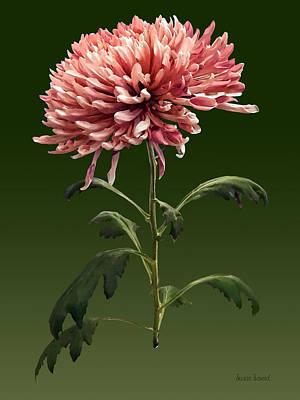 Floral Photograph - Chrysanthemum Shelbers by Susan Savad