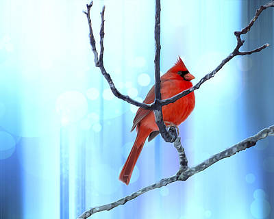 Cardinal Digital Art - Chubby Winter Redbird by Bill Tiepelman
