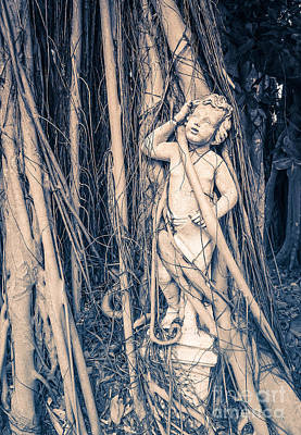 Banyan Photograph - Cherub by Edward Fielding