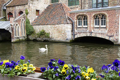 Photograph - Church And Swan by Crystal Nederman