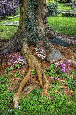 Photograph - Churchyard Tree by Ian Mitchell