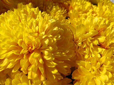 Chysanthemum Art Print by Ellie Waligurski
