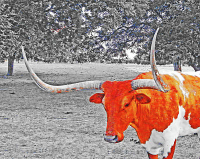 Digital Art - Cibolo Longhorn by Lizi Beard-Ward