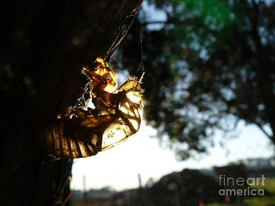 Photograph - Cicada Be Gone by Jane Ford