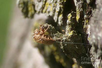 Photograph - Cicada Bug by Living Color Photography Lorraine Lynch