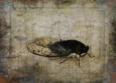 Photograph - Cicada Song by TnBackroadsPhotos