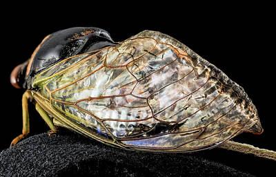 Cicada Photograph - Cicada by Us Geological Survey
