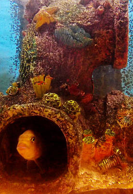 Painting - Cichlid Peek A Boo by Shere Crossman
