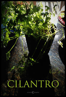 Photograph - Cilantro by Tim Nyberg