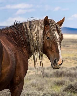 Photograph - Cimarron - Wild Mustang Stallion by Nadja Rider