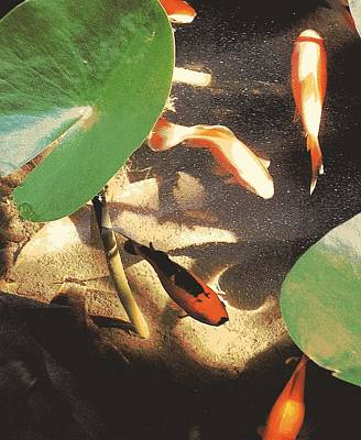 Fish Digital Art - Cinco Peces by Tg Devore