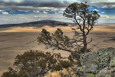 Photograph - Cindercone Life by Adam Jewell