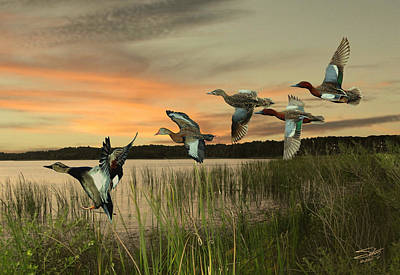 Digital Art - Cinnamon Teal Ducks At Dusk by IM Spadecaller