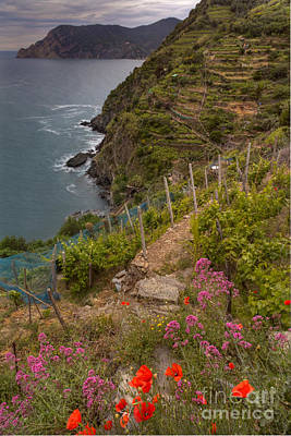 Photograph - Cinque Terre Terraces In Spring by Michele Steffey