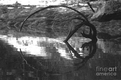 Photograph - Circle And Heart by Cynthia Lagoudakis