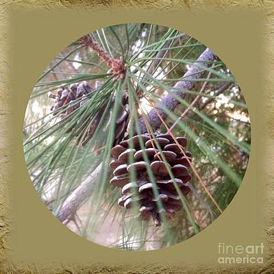 Photograph - Circle Of Cones  by Susan Garren