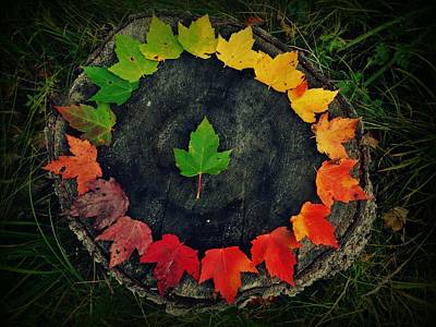 Photograph - Circle Of Leaves  by Sarah Pemberton