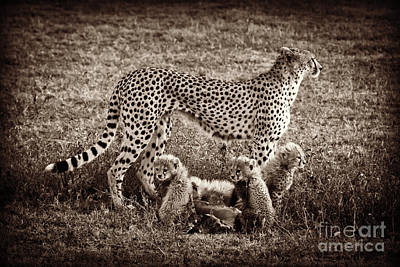 Photograph - Circle Of Life by Chris Scroggins