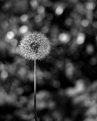 Dandelion Photograph - Circles Of Life by Rona Black