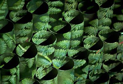 Photograph - Circular Ferns by Doug Davidson