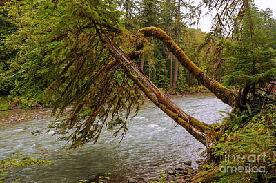 Washington Driftwood Beach Fog Wall Art - Photograph - Cispus River At Iron Creek - Washington State by Yefim Bam