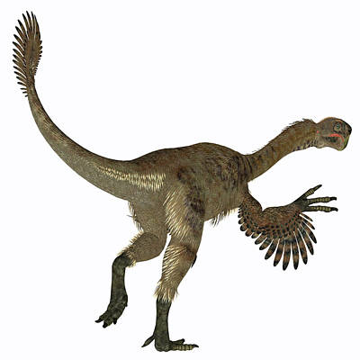 Photograph - Citipati Female Dinosaur, White by Corey Ford