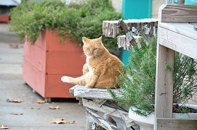 Photograph - City Kitty by Jan Amiss Photography
