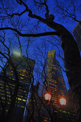 Photograph - City Tree by Emily Stauring