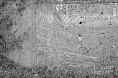 Cityscape A10o Austin Tx Art Print