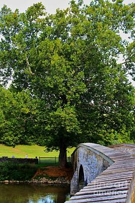 Civil War Era Eastern Sycamore Tree Art Print