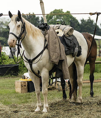 Photograph - Civil War Horse by David Lester