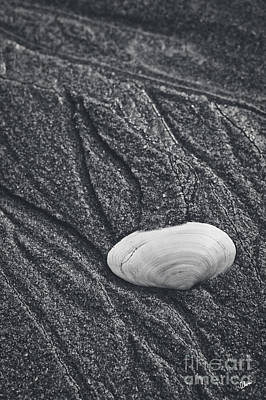 Photograph - Clam Shell by Alana Ranney