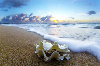 Seashells Photograph - Clam Foam by Sean Davey