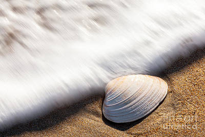 Photograph - Clam Shell by Susan Cole Kelly