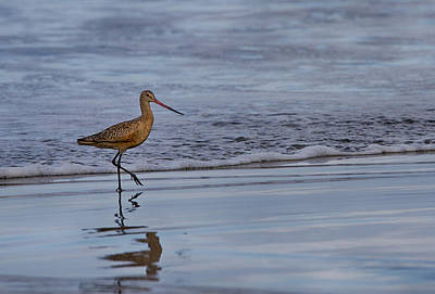Photograph - Clapper Rail On The Beach by Robert Woodward