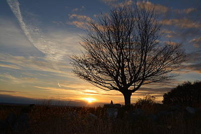 Juan Bosco Forest Animals Royalty Free Images - Clary Hill Sunset Lone Maple Royalty-Free Image by Paul Barnes