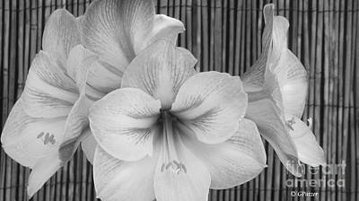 Classic Lilies Art Print by Greg Patzer