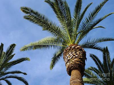 Photograph - Classic Palms by Meghan at FireBonnet Art
