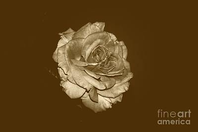 Photograph - Classic Rose by Mark McReynolds