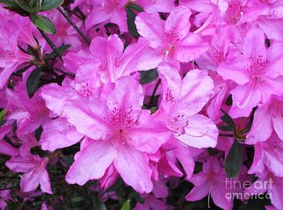 Art Print featuring the photograph Azaleas by Donna Dixon