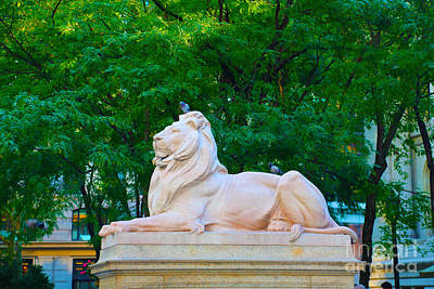 Library Digital Art - Clean Lion by Dan Hilsenrath