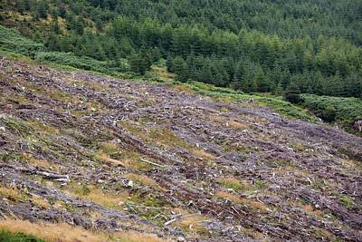 Conifer Tree Photograph - Clear Felled Conifer Plantation by Ashley Cooper