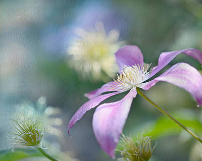 Digital Art - Clematis by Ann Bridges