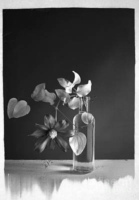 Photograph - Clematis by Elena Nosyreva