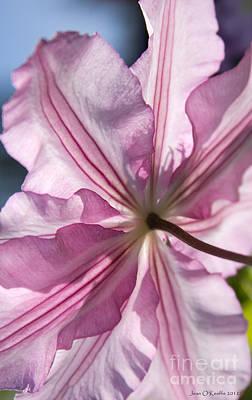 Florets Photograph - Clematis Embrace  by Jean OKeeffe Macro Abundance Art