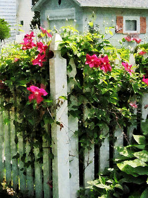 Fence Photograph - Clematis On Fence by Susan Savad
