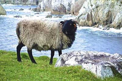 Photograph - Clew Bay Sheep by Charlie and Norma Brock
